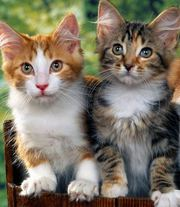 Cat Boarding Services in Kent